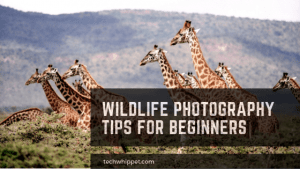 Wildlife Photography Tips for Beginners