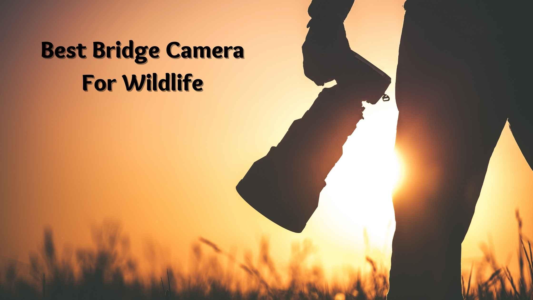 Best Bridge Camera For Wildlife
